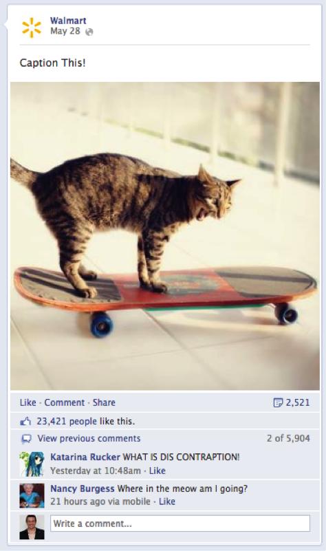 Kitten walmart caption this post