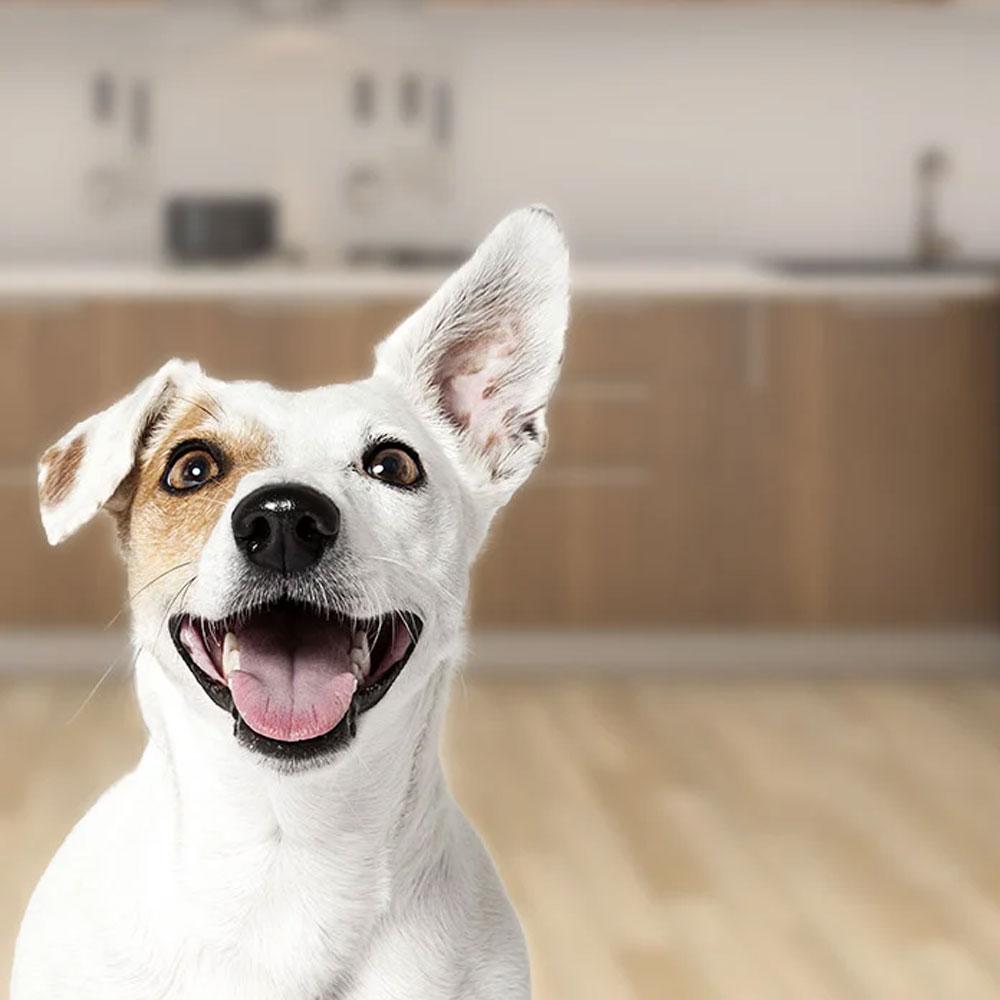 Ecommerce website for UK pet shop Rokers